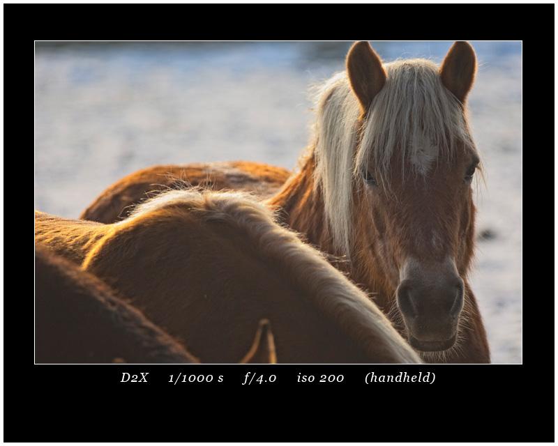 Horses D2X