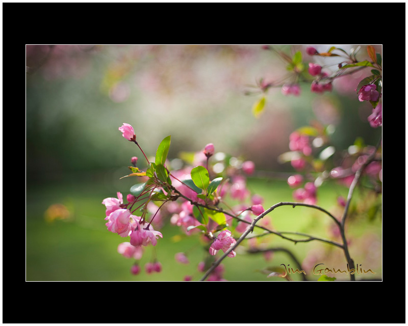 Blossoms and DOF